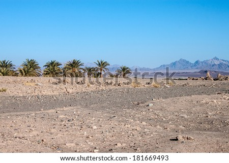 Palms and desert in Iran