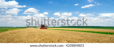 Panorama of harvester combine harvesting wheat on sunny summer day.