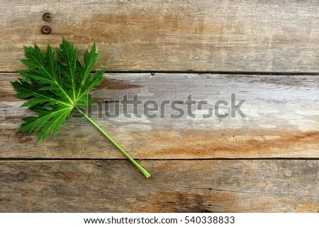 Papaya leaf on a wooden background.