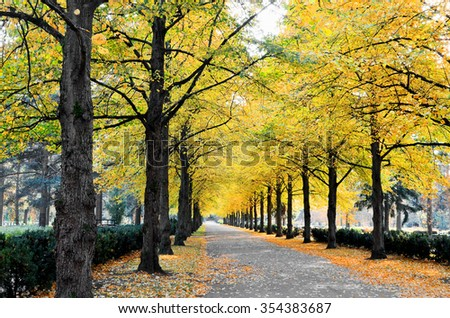 Park alley in autumn