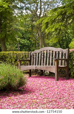 park bench surrounded by pink blossom