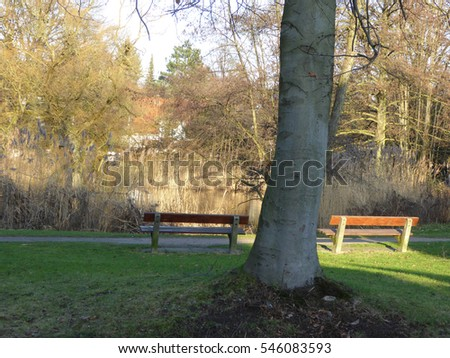 Park with Bench in the Early Wintertime