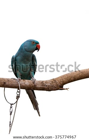 Parrot on white sky  background  in the evening.