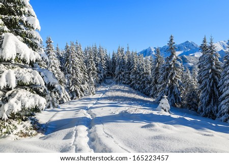 Path in fresh snow on Rusinowa Polana in winter landscape of High Tatra Mountains, Poland