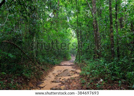 Path in the wet and deep jungle of Ko Mook island in Thailand