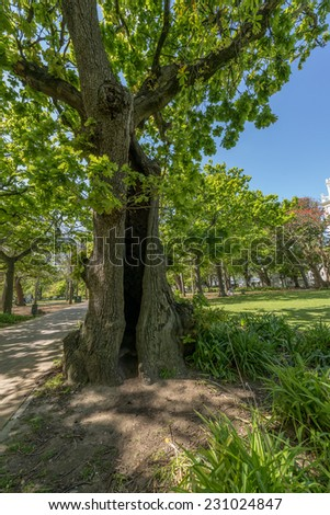 Paths, oak trees and grassy lawn in the Cape Town Company Gardens, situated in Queen Victoria Street, adjacent to the South African Parliament. Teeming with squirrels and plants