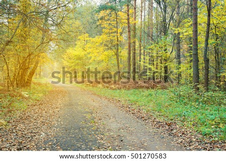 Pathway through the beautiful autumn forest. Autumn forest, covert. Tinted photo.
