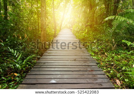 Pathway to jungle with flare