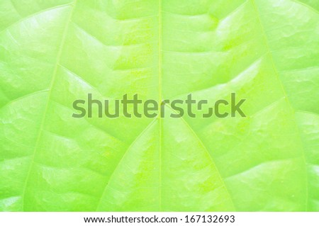 Pattern of leaf textures background