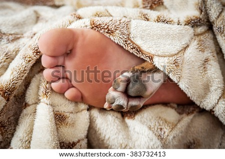 Paw and foot of sleeping dog and its owner in the bed