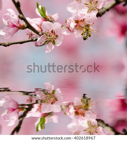 peach blossom and bee