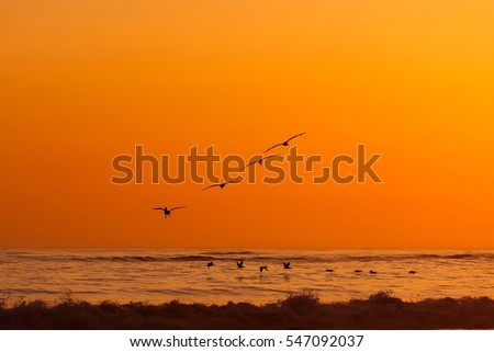 Pelicans flying over Pacific Ocean during colorful sunset