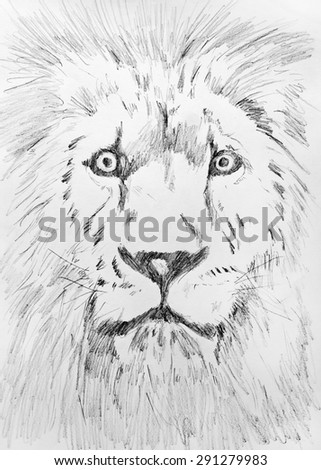 Pencil hand drawing sketch of Lion head on white paper