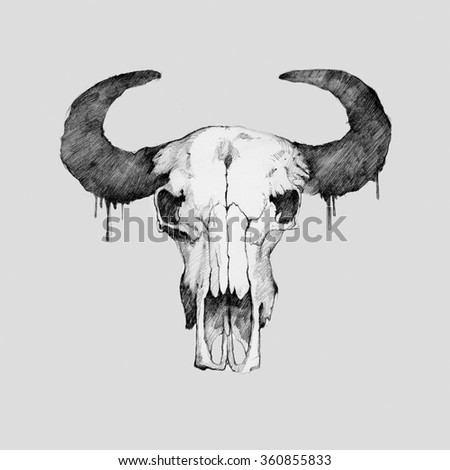 Pencil illustration, hand graphic - old head skull of bull isolated on white background