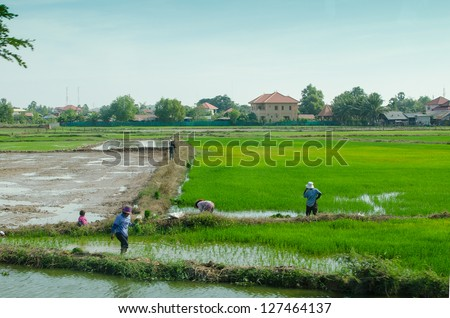 People working in rice field in Cambodia