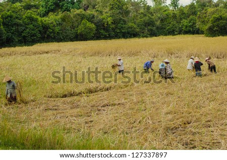 People working in rice fields, Angkor, Cambodia