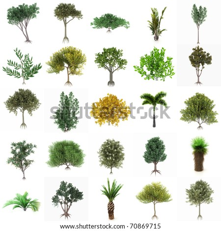 Perfect Group of Trees isolated on a white background. Twenty five pieces with Large image Resolution
