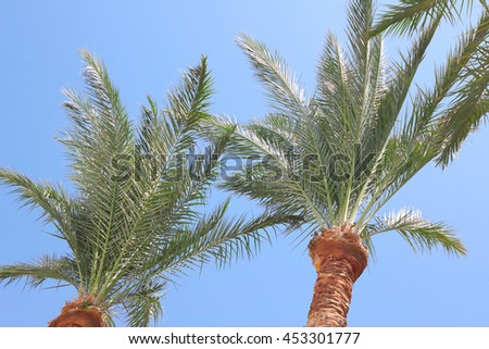 Perfect palm trees against a blue sky