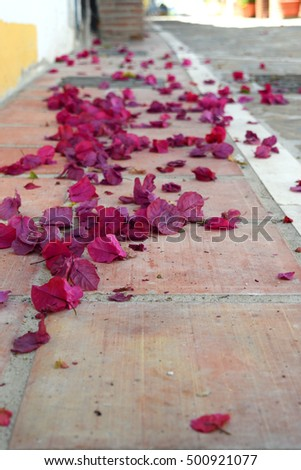 Petals of beautiful pink flowers in the streets of the Spanish city.