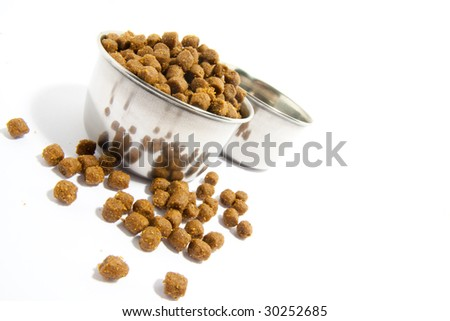 Pets forage over white background