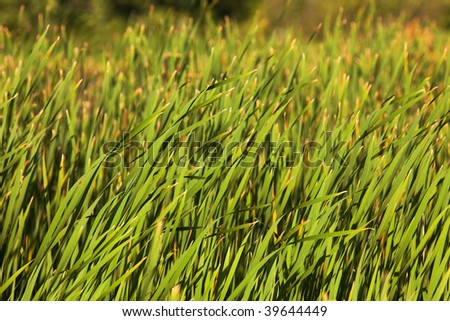 photo of a green grass background