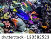 Photo of a tropical fish on a coral reef in aquarium - stock