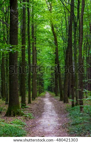 Photo of an old trees with road in a green beautiful forest