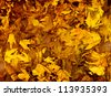 Photo of golden autumn leaves background, natural backdrop, yellow trees foliage, dry brown wood leaf, autumnal nature, fall season, leaves texture, old tree leaf in puddle, maple leaves wallpaper - stock photo