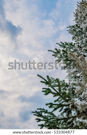 Photo of half of a snow covered tree set against a softly clouded blue sky.