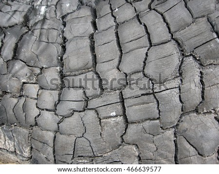 Photo rough texture of burnt tree for your design