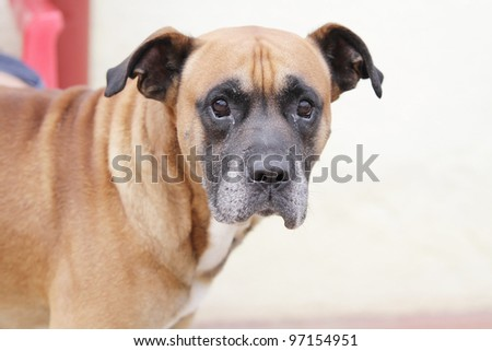 Photograph of a cute dog