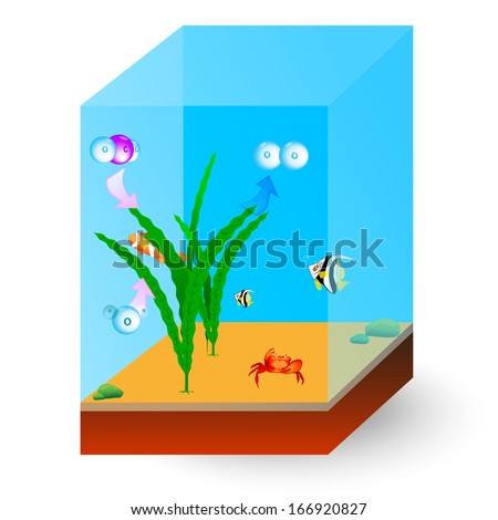 Photosynthesis and Respiration in Aquatic Plants. Fish ...