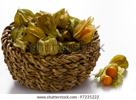 Physalis isolated on white background