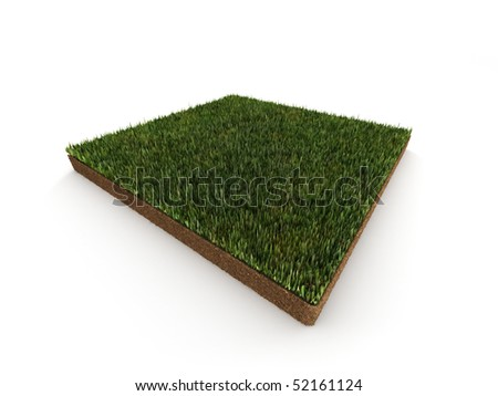 Piece of grass isolated on white background. High quality 3d render.