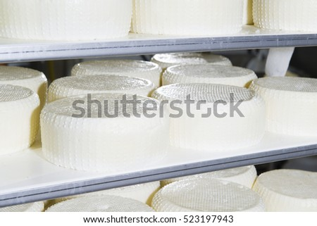 Pieces of fresh cheese on the shelves ready for the maturing