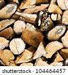 Pile of wooden logs background or texture - stock photo
