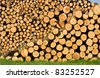 Piles of oak and pine trees - stock photo
