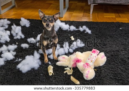 Pincher dog with his victim