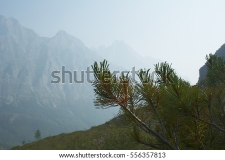 Pine branches on the hillside