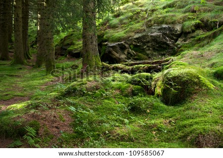 Pine forest growing on a mossed side of a hill in a sunny day near