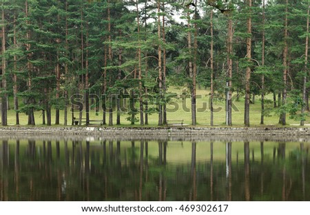 Pine tree forest on Zlatibor Mountain in Serbia