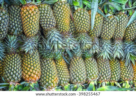 Pineapple after harvest, with hundreds of pineapple are lined up like ripe truth Transporters standard eye delivered to customers, this is more healthy foods healthy minerals humans