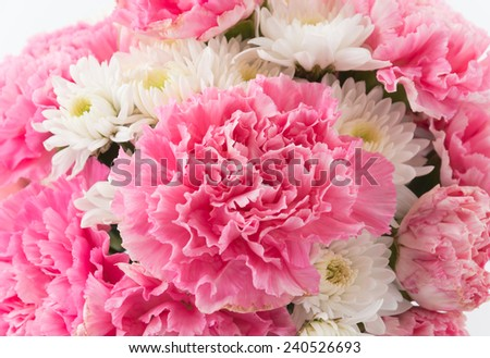 pink carnations flower on white background