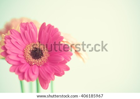 Pink coral  and hot pink daisies over green mint spring background
