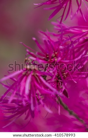 pink flower on tree in spring