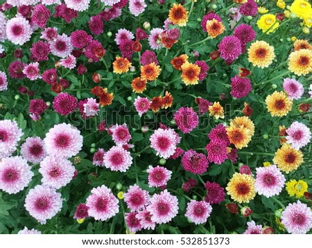 pink flowers,flowers background