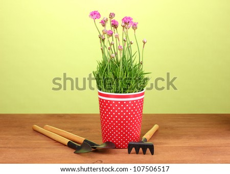 Pink flowers in pot with instruments on wooden table on green background