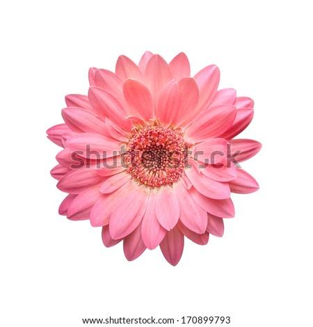 Flower Mandala Isolated On White Background Stock Photo