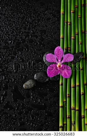 Pink orchid with stones on bamboo grove and  wet background