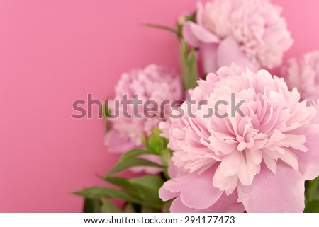 Pink peony flower on pink background with copy space for greeting message. Selective focus. Mother's Day background concept